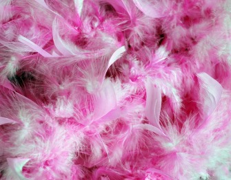 pink-feathers-2814_640