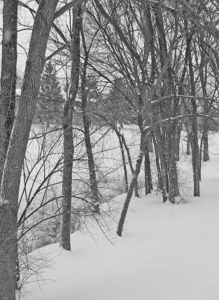 trees-18509_1920