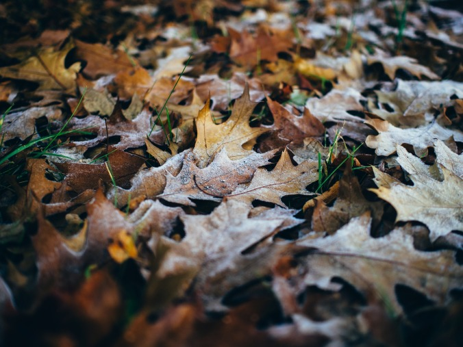 leaves-933040_1920
