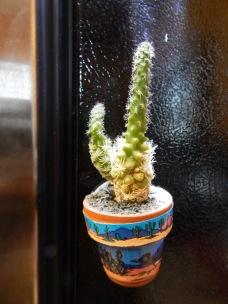 cactus magnet_8