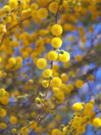 dec2009-wildflowers-354