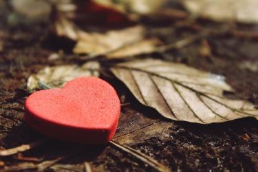 heart-1318850_1920