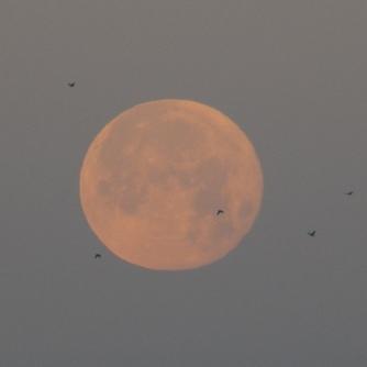 Moon_39
