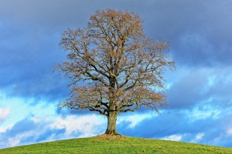 tree-596453_1920