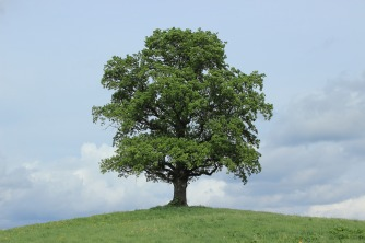 tree-773736_1920